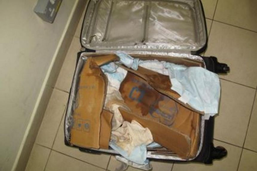Diapers and towels were used as lining in the luggage bags to absorb turtle excrement.