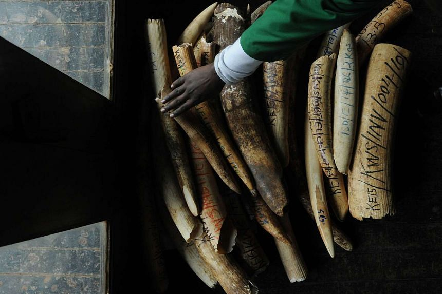 A Kenya Wildlife Services (KWS) staff member takes an inventory of illegal elephant ivory stockpiles at the KWS headquarters in Nairobi on July 21.