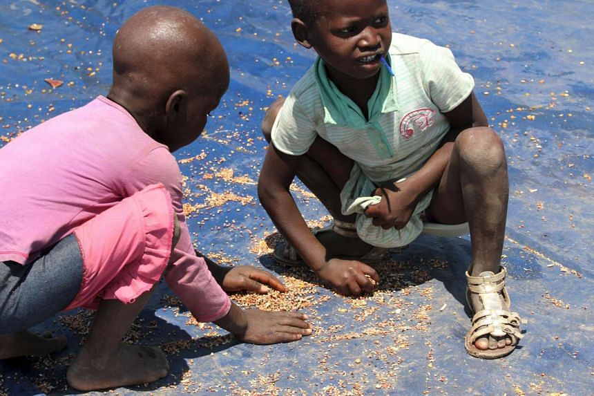 Zimbabwean children pick loose cereal dropped during a monthly food distribution, in rural Mupinga area in Chiredzi, Zimbabwe.