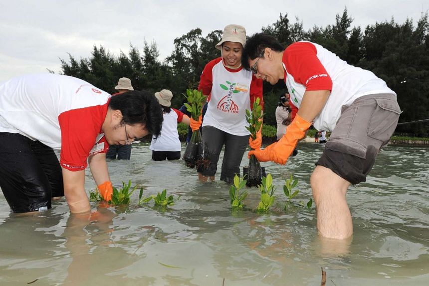 Staff from OCBC planted 10,000 mangrove trees along the coastal shores of Karya Island, off Jarkarta, in one afternoon.