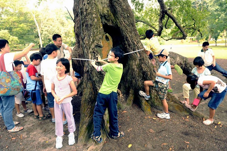 About 30 children, aged 4 to 13, and their parents measuring the girth of the Tembusu tree at the Singapore Botanic Gardens as part of the Young Arborist Programme, a joint community project by NParks and HSBC for schools.