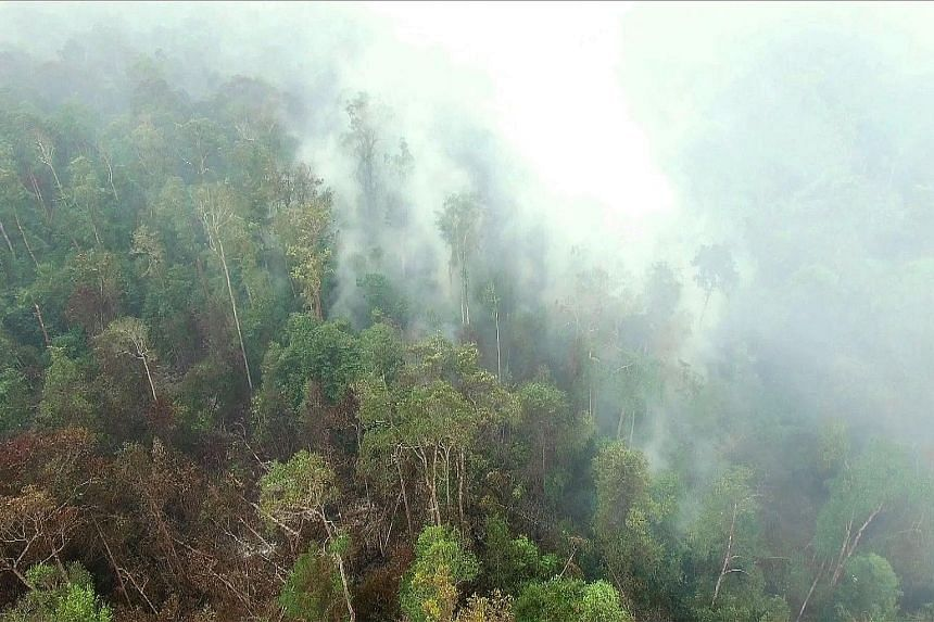 A still from drone footage shows fires burning at the Gunung Palung National Park in West Kalimantan last month.