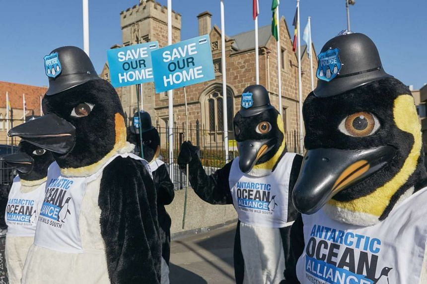 Environmentalist campaigners dressed as penguins demonstrate outside the Commission for the Conservation of Antarctic Marine Living Resources (CCAMLR) annual talks in Hobart on Oct 19, 2015.