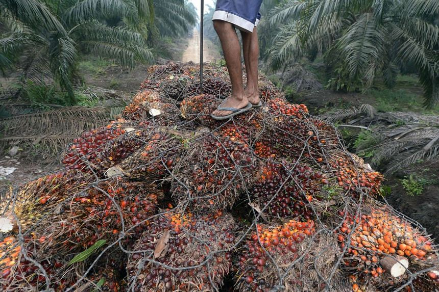 Palm oil inventories have been rising since January last year. While output from Malaysia grew only 1.2 per cent in the first nine months of this year, production from Indonesia (above), which accounts for 54 per cent of global supply, rose 16.7 per