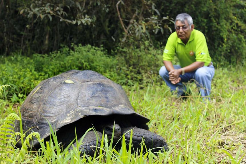 Giant tortoises can reach some 225kg and are among the famous creatures of the Galapagos Islands.