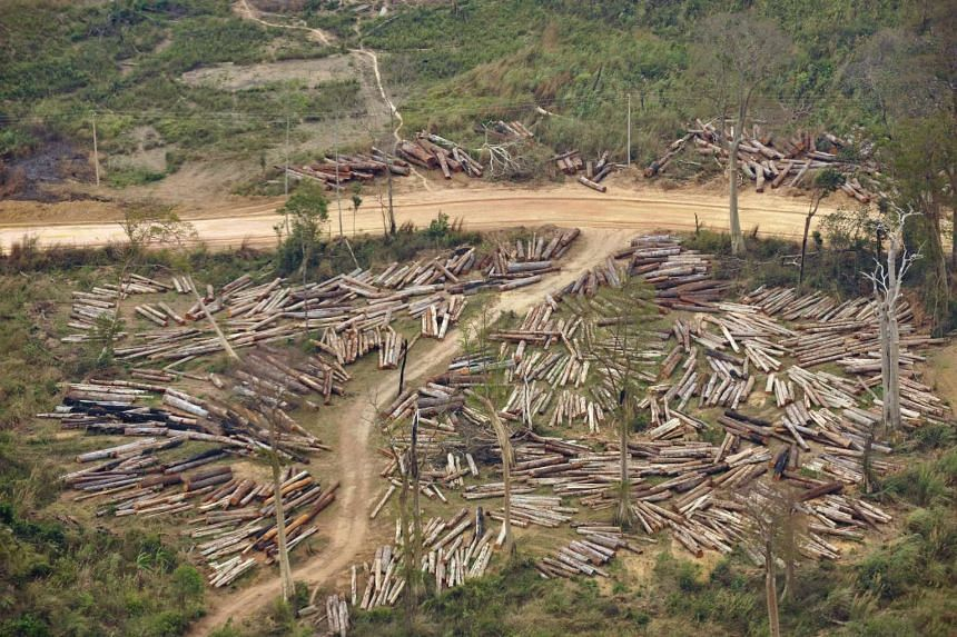 A logging site inside a forest in Boulikhamsai, Laos. The state forest inspection and other enforcement agencies have little impact on the industry, a WWF report says.