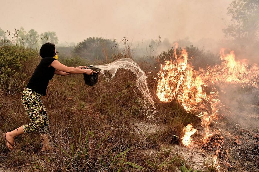 A villager tries to extinguish a peatland fire on the outskirts of Palangkaraya city, Central Kalimantan on Oct 26, 2015.