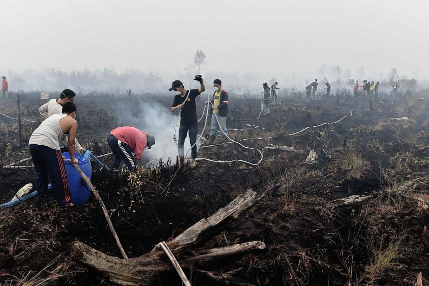 This photo taken on Oct 27, 2015 shows volunteers extinguishing a peatland fire in the outskirts of Palangkaraya, a city of 240,000 in Indonesia's central Kalimantan where respiratory illnesses have soared as the smog has worsened in recent weeks.