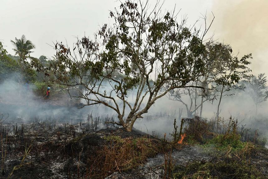 Firefighters and volunteers extinguishing a fire on peat land in Kuala Kapuas, Kalimantan, on Oct 25, 2015.