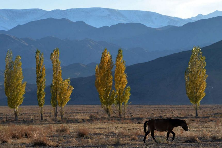 A horse grazing near the Issyk-Kul lake, some 300km from Kyrgyzstan's capital Bishkek, on Oct 25, 2015.