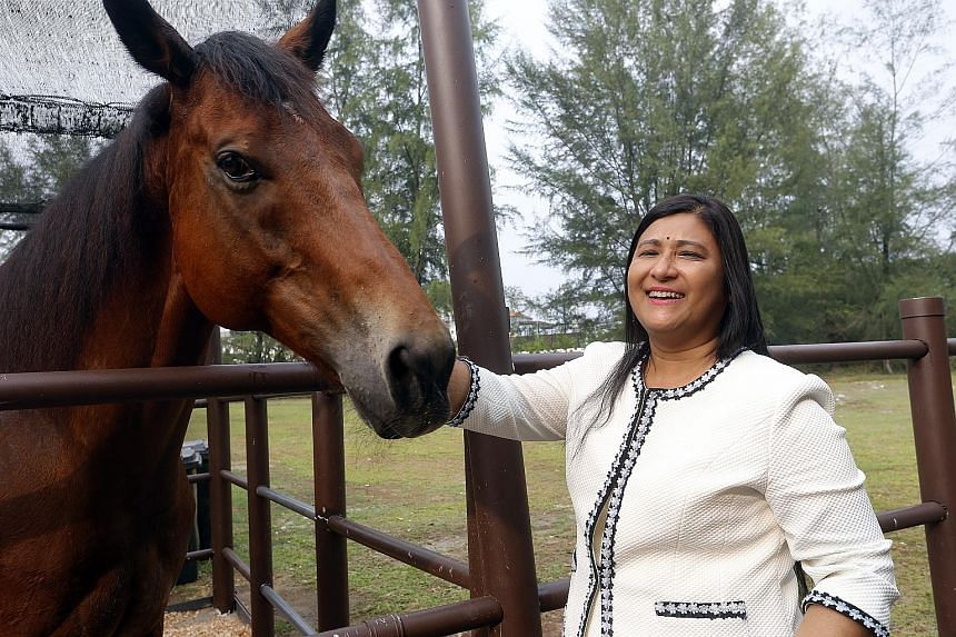 Besides Punggol Ranch, Mrs Mani Shanker has two other stables, one in Pasir Ris and the other called Horsecity in Bukit Timah.