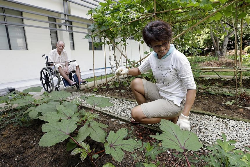 Volunteer Linda Kwok, 54, tends to the vegetable garden while patient Dixie Clarence of All Saints Home observes.