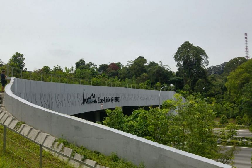 The Eco-Link@BKE.