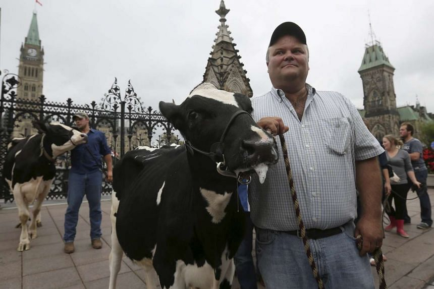 Dairy farmers standing with their cows during a protest against the Trans-Pacific Partnership in Ottawa, Canada, on Sept 29.