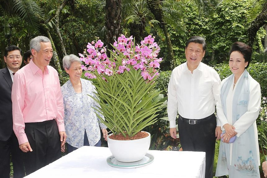 Prime Minister Lee Hsien Loong, his wife Ho Ching, President Xi Jinping and Madam Peng Liyuan appreciating the Papilionanda Xi Jinping-Peng Liyuan, an orchid hybrid named after the visiting dignitaries, at the Botanic Gardens. PM Lee and Ms Ho hostin