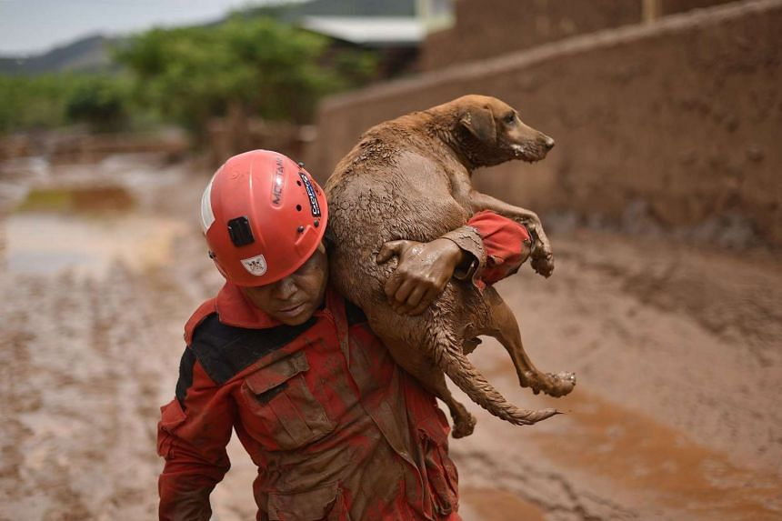 A fireman rescuing a dog that was trapped in the mudslide in Bento Rodrigues on Nov 9.