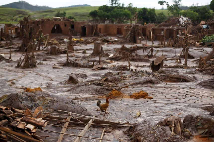 A chicken walks amid the debris in Bento Rodrigues district after a dam burst, in Mariana, Brazil, on Nov 9, 2015.