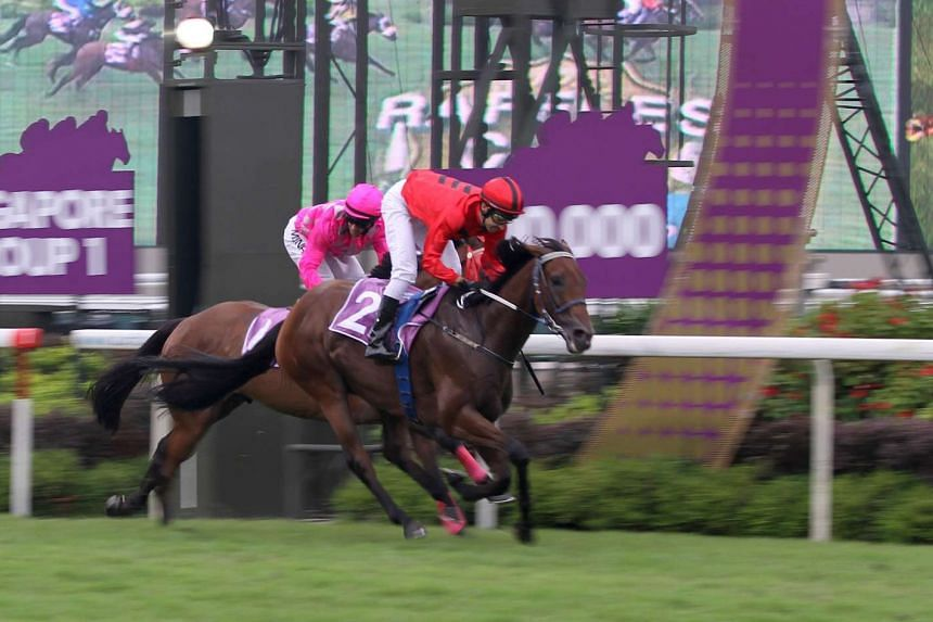 Stepitup (No.2) racing at Kranji on Oct 25.
