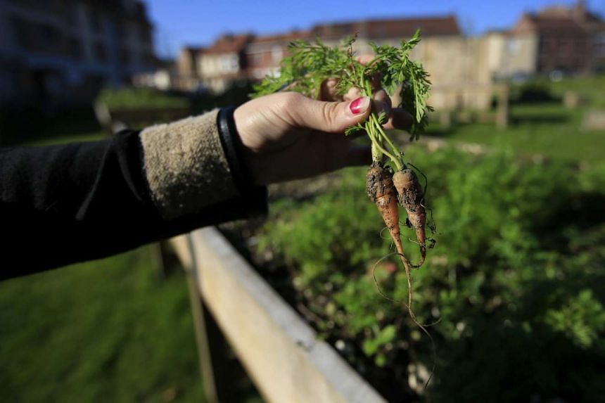 A resident of Loos-en-Gohelle with carrots harvested in a shared flower and vegetable garden installed in the town's city centre. The town in the north of France made a successful transition from coal mining to a green economy.