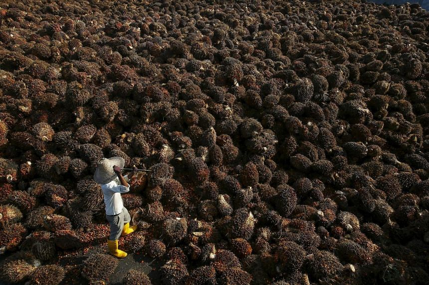 In the tropical oils business, pre-tax profit fell 45.9 per cent to $149.5 million. This was because of declining crude palm oil prices and lower margins from the refining and downstream businesses, Wilmar said.