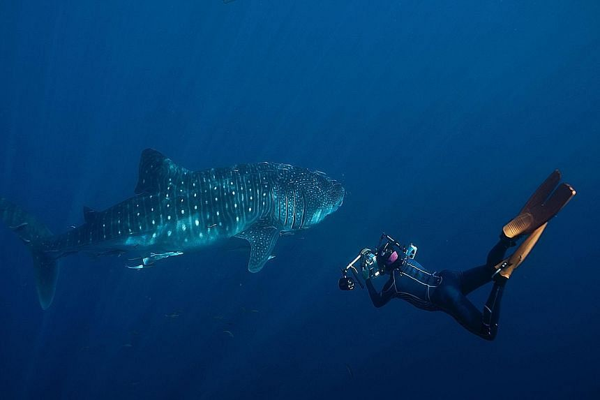 Singapore-born Michael Aw photographing a whale shark in West Papua, Indonesia, in 2012.