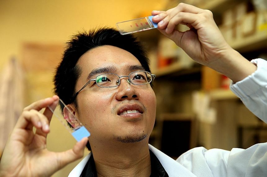 """Dr Ng Shyh Chang and his team at the Genome Institute of Singapore at A*Star hope to achieve the """"holy grail"""" for ageing research - to reset adult cells partially to young adult cells instead of embryonic-like stem cells."""