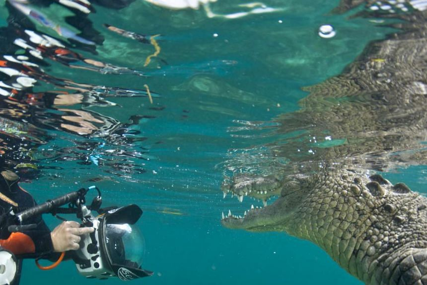 Award-winning conservation photographer Micheal Aw taking a picture of a saltwater crocodile at the Garden og the Queen, an archipelago in the southern part of cuba. The national park is the one of the Cuba's largest protected areas.