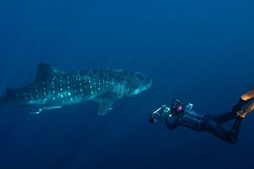 Singapore-born Michael Aw photographing a whale shark in West Papua, Indonesia, in 2012