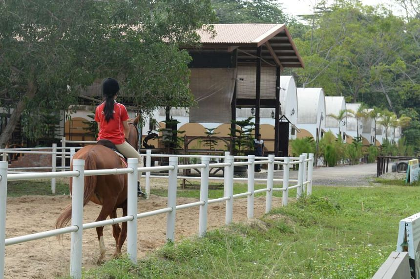 A 73-year-old woman has died after being pinned under a horse at Gallop Stable's Punggol Ranch on Nov 14, 2015.