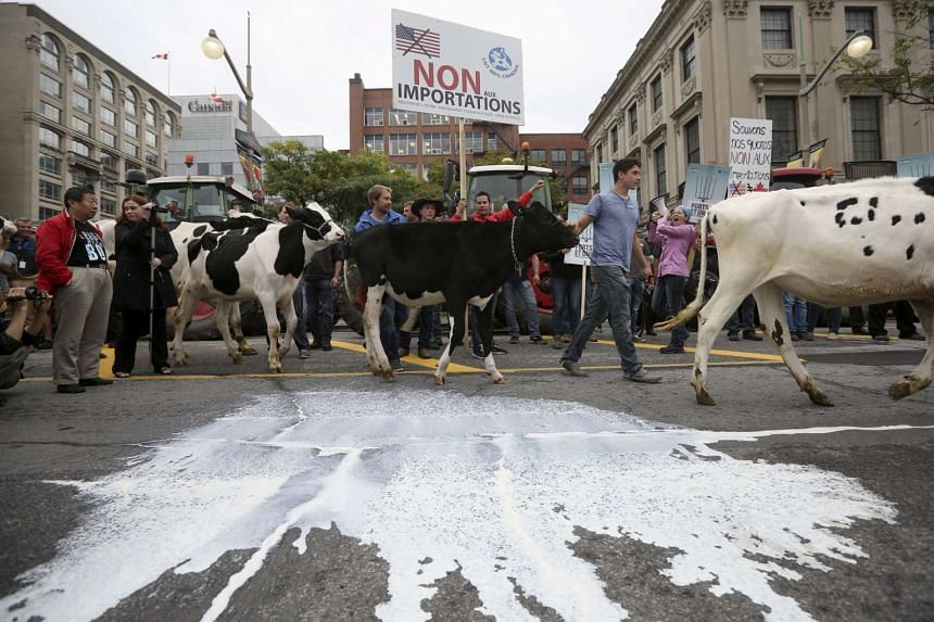 Dairy farmers walking their cows past milk thrown on the street during a protest against the Trans-Pacific Partnership (TPP) trade agreement in front of Parliament Hill in Ottawa, Canada, in late September. Liberalising farming sectors is a hot issue