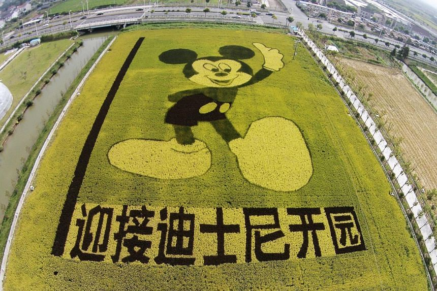 A paddy field near Shanghai has rice plants grown to form the shape of Mickey Mouse to celebrate the Disney Shanghai Resort which will open next year.