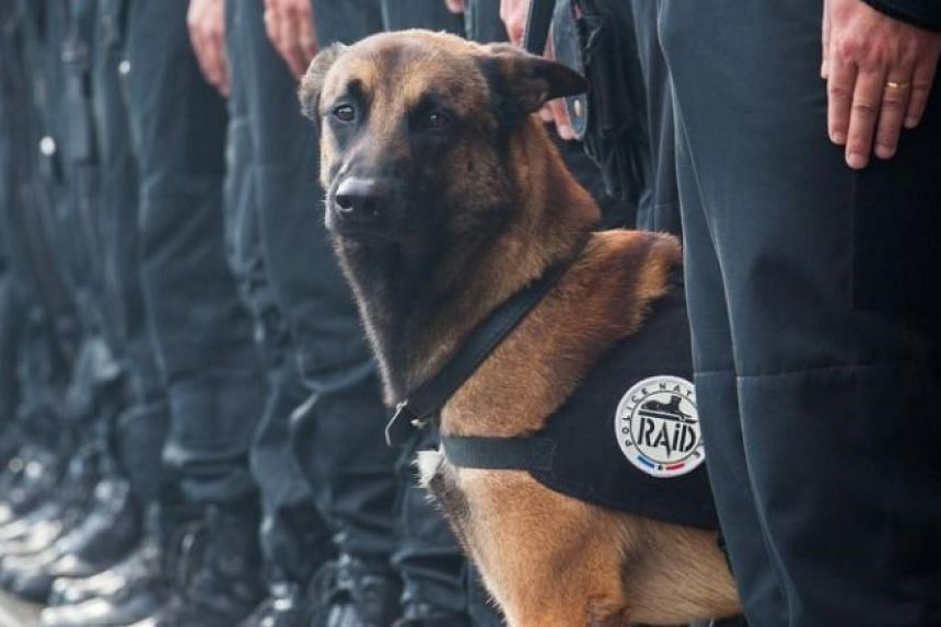 French police tweeted this photo of Diesel.