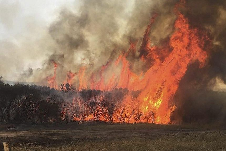 The carcass of a cow lies in South Africa's Black Umfolozi River (above) and a bushfire (left) burns out of control in Western Australia.