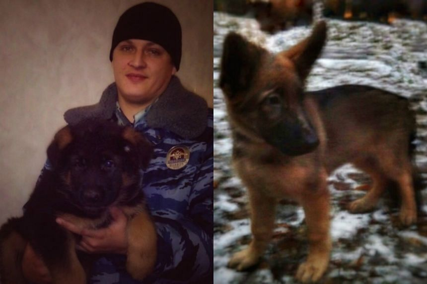 The Alsatian puppy that Russia has offered to send to France in a gesture of solidarity.