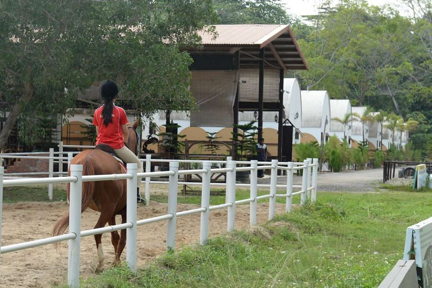 Since the death of an elderly woman at Gallop Stable's Punggol Ranch last Saturday, another rider has come forward to claim that the operator mishandled her fall at its Turf Club Road branch last year. The woman, who gave her name only as Ms Toh, sai