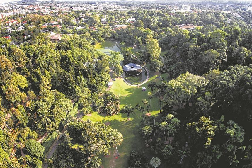 Aerial view of the Singapore Botanic Gardens on May 29, 2015.