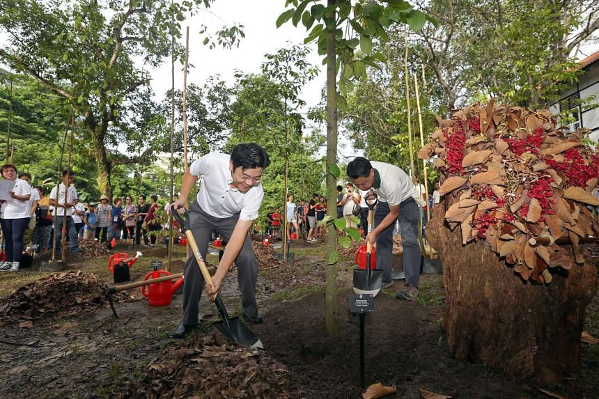 Minister for National Development Lawrence Wong and (right) Kenneth Er (CEO, NParks) planted a Meranti Tembaga tree at a Singapore Botanic Gardens community planting event at the Learning Forest on Nov 21, 2015.