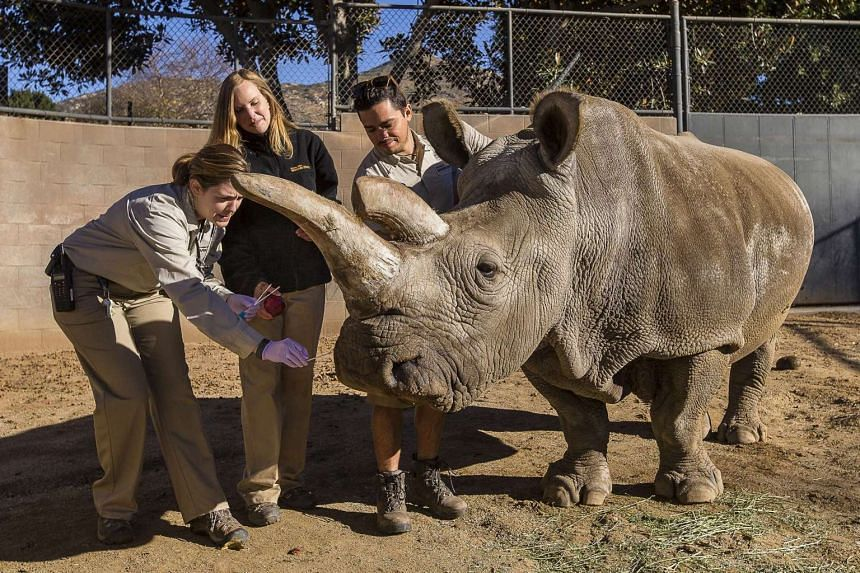 Nola receives a veterinary exam at the San Diego Zoo Safari Park in December, 2014.