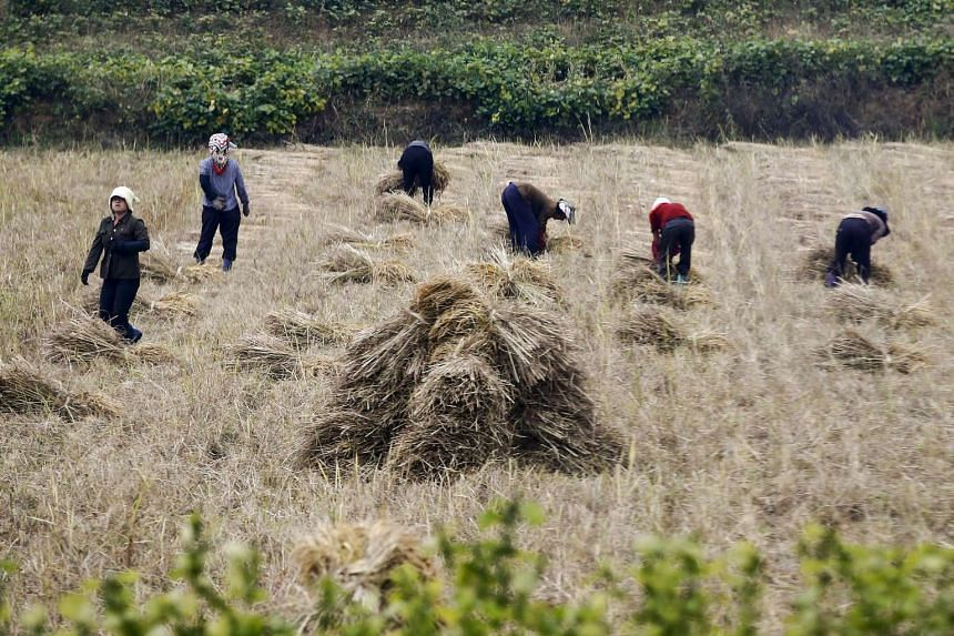 People work in a field just outside Pyongyang, North Korea.
