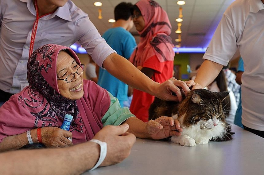 Lion-O, a four-year-old Maine Coon cat, gets the attention of Madam Siti Aminah Siregar, 70, at a cat therapy session.