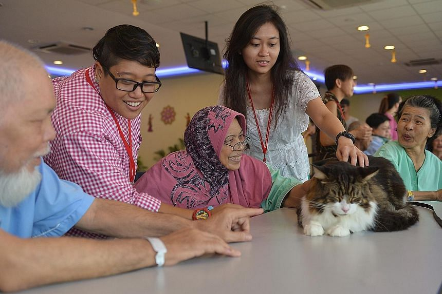 SPH staff Samsiah Hassan (in checked top) and Noor Faezah Abdul Hamid with Madam Siti Aminah Siregar at the therapy session conducted by Cat-Assisted Therapy Singapore at Ang Mo Kio - Thye Hua Kwan Hospital. It was the group's first collaboration wit