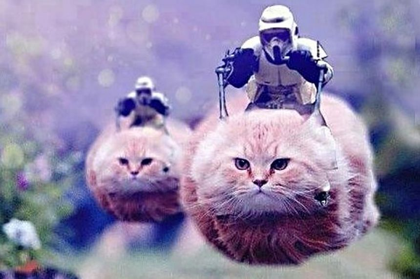 A surreal picture of two Star Wars stormtroopers riding hover scooters shaped like cats was seen on Twitter.