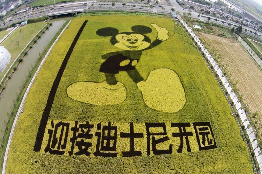 Rice plants in the shape of Mickey Mouse on a paddy field to celebrate the Shanghai Disney resort, which will open in 2016.