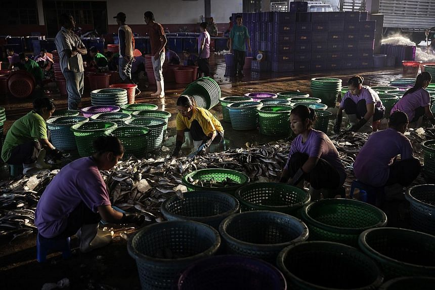 Migrant workers from Myanmar at a processing plant in Ranong, Thailand. Most of Thailand's seafood workers are from Cambodia or Myanmar, and were taken into Thailand illegally by traffickers.