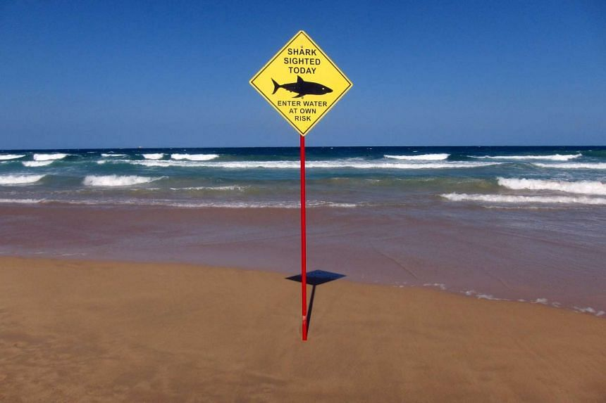 A sign erected on Manly Beach indicates a shark sighting in Sydney, Australia, on Nov 24, 2015.