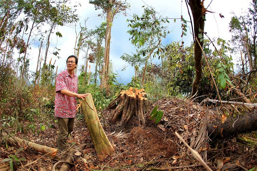 Dr Shawn Lum, president of Nature Society (Singapore), looking at fallen trees at Mandai after a storm cut through the area. Some 10,000 trees from 150 species were damaged in the 40 ha zone, which is as big as 80 football fields on the afternoon of
