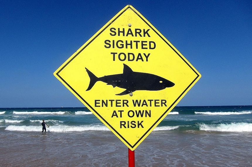 The New South Wales government will boost helicopter surveillance over popular beaches like Sydney's Manly Beach after a spate of shark sightings and attacks.