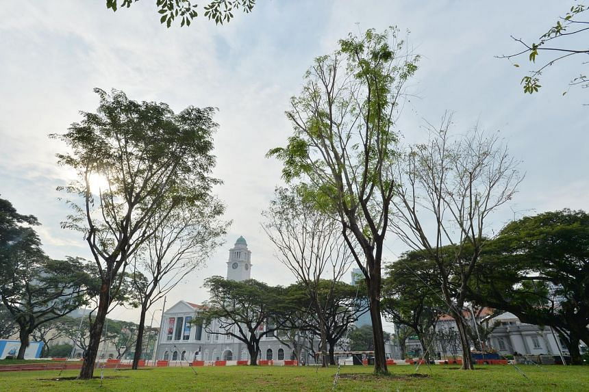 The new trees stand in the same spot as their predecessors, but are resistant to the fungal disease that ravaged the old ones. They were planted as part of the Civic District enhancement project.