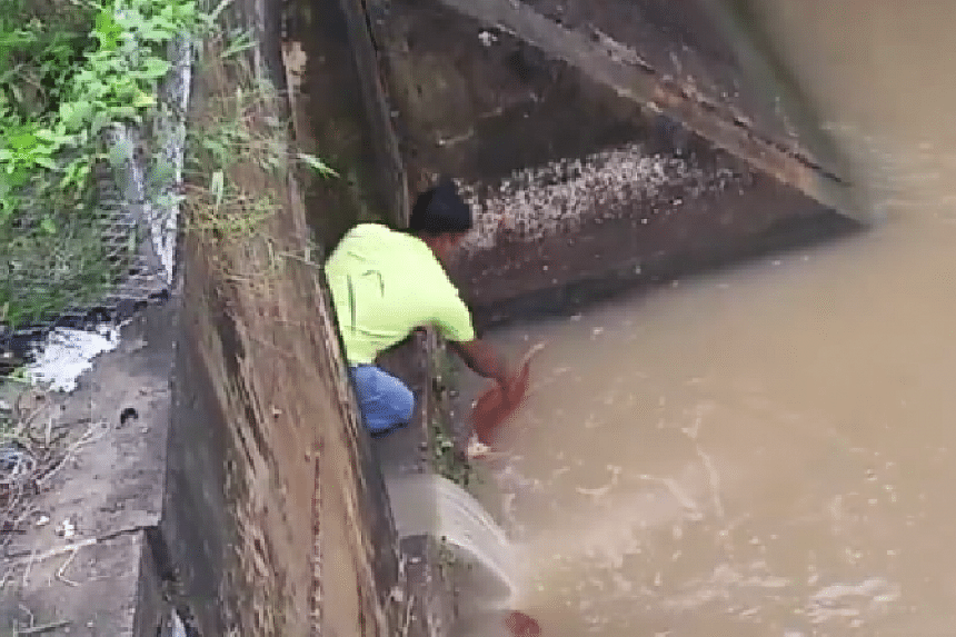 The foreign worker rescuing the cat from the canal.