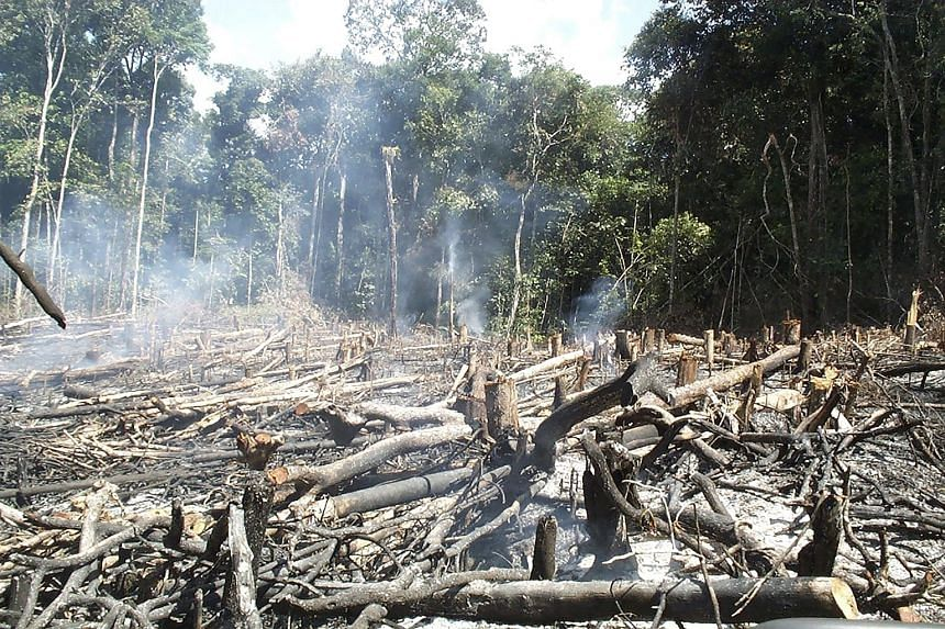 Traditional slash-and-burn agriculture is shown in central Guyana in a photo taken in 2000. South America's vast Amazon region harbours one of the world's most diverse collections of tree species. A study published in the journal Science Advances sho